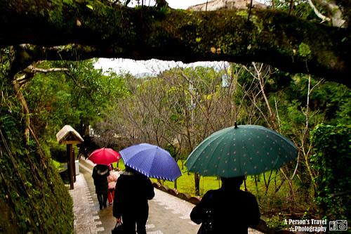 飄著細雨的角板山 & 三色傘