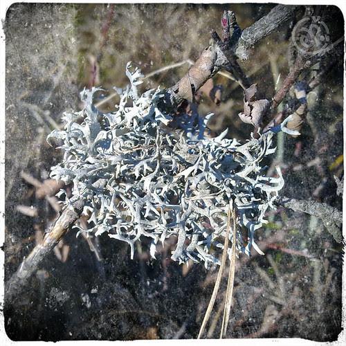 lichen-o-matic