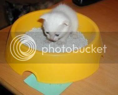 fun mini cat