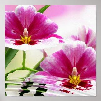 Orchide ripple print