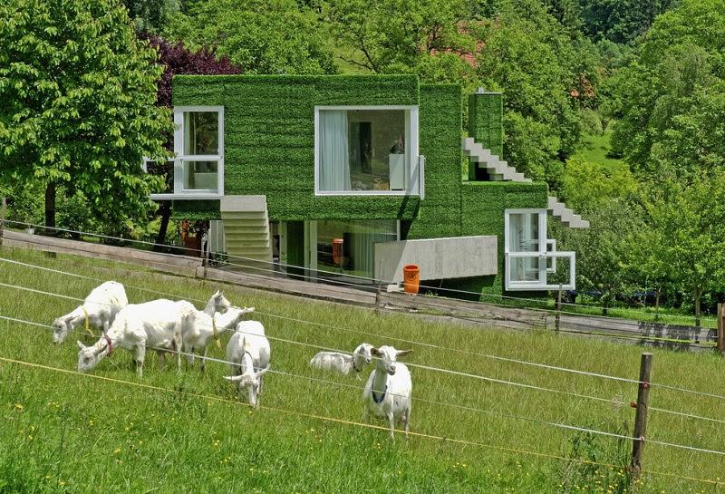 Зеленый дом в Австрии, покрытый травой. Фото