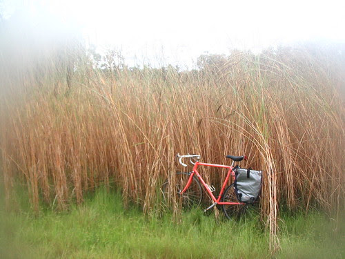 bike in sorghum
