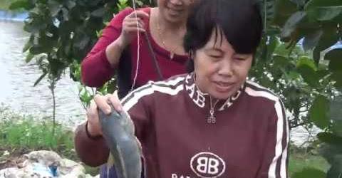 Câu cá có 1 0 2 - Lẩu cá tươi rói