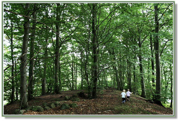 Walk_in_the_forest, nature, trees, children