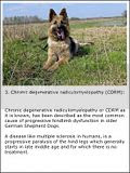 photo GermanShepherdproblems-3a_zps9de610bc.jpg