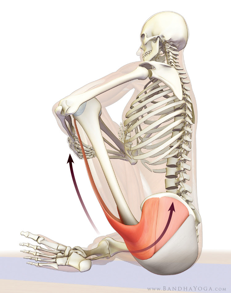 tensor fascia lata and gluteus medius in cradle stretch