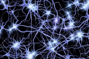 """<p>Cada cuatro segundosoleadas de actividad neuronal viajan de un punto a otro de la corteza cerebral. / <a href=""""https://www.flickr.com/photos/pennstatelive/32617171062/"""" target=""""_blank"""">Penn State</a></p>"""