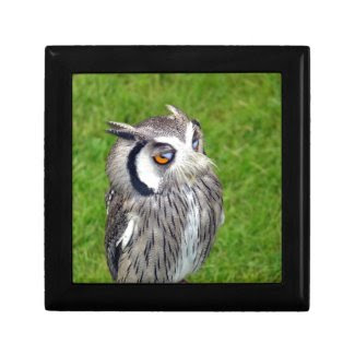 Gorgeous Little Owl Gift Box