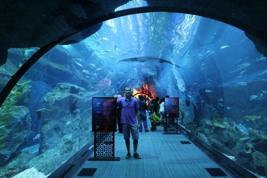 The Lost Chambers Aquarium Dubai Map,Dubai Tourists Destinations and Attractions,Things to Do in Dubai,Map of The Lost Chambers Aquarium Dubai,The Lost Chambers Aquarium Dubai accommodation destinations attractions hotels map reviews photos pictures
