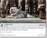 photo Militarycelebratesnationaldogday-4_zps43410145.jpg