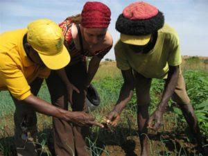 Ghana biofuel development