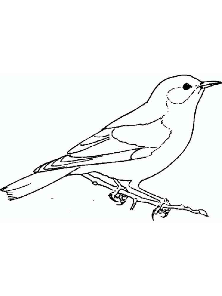 Bluebird birds coloring pages 11