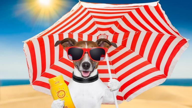 El perro también puede sufrir los efectos del calor