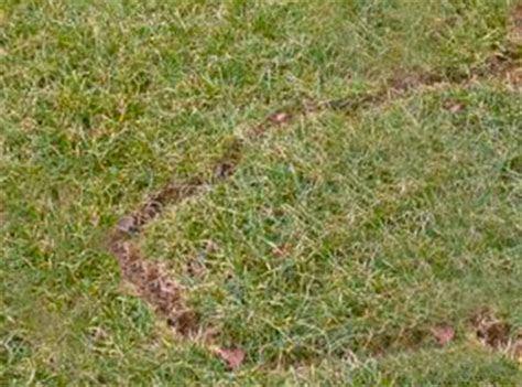 Tips for Repelling Moles & Voles In Garden  How Do I Get Rid Of Voles In My Yard   I Must Garden