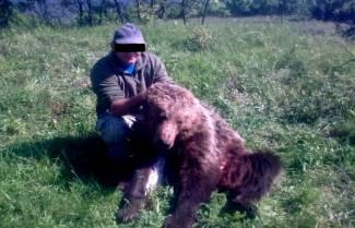 Αυτός ο άντρας από τη Βέροια αναζητείται για φόνο αρκούδας (μια έκκληση του ΑΡΚΤΟΥΡΟΥ)