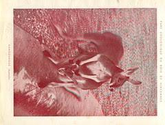 zoorelief p10