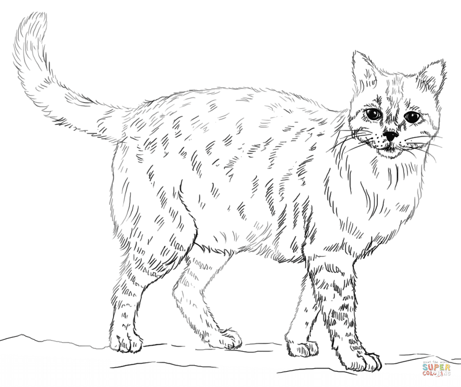 99 Coloring Pages Of Cats Images & Pictures In HD