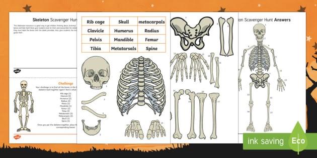 Bone Anatomy Crossword - Muscle Anatomy Crossword