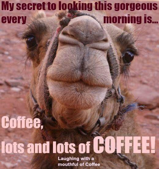 Hump Day Camel Funny Wednesday Coffee Quote Pictures Photos And