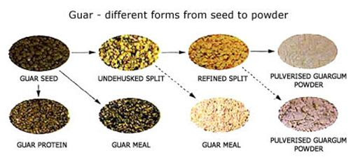 Guar gum - seeds to powder