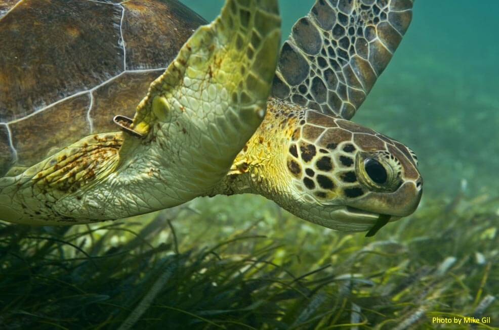 http://texasseagrass.org/img/sea_turtle.jpg