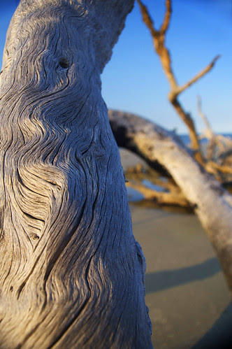 Driftwood by erickpineda527
