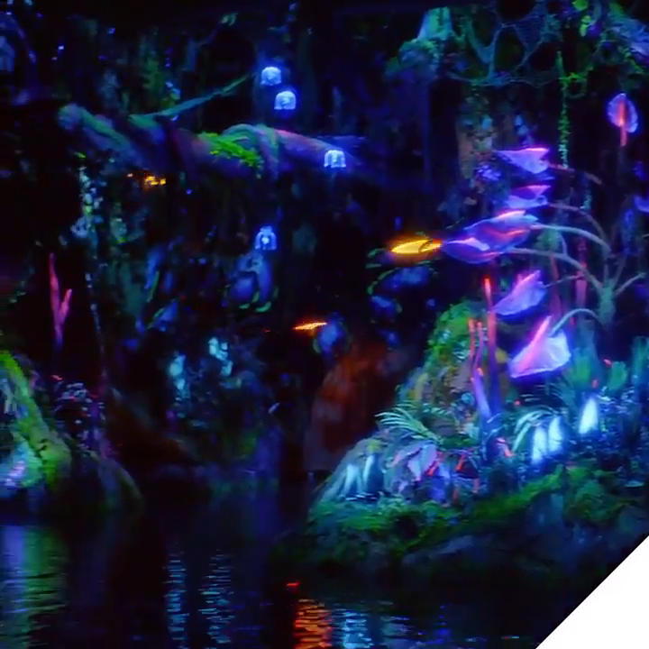 VIDEO - @VisitPandora Twitter account shares a glimpse of ...
