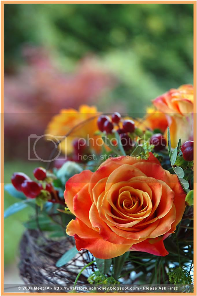 Orange Rose by MeetA