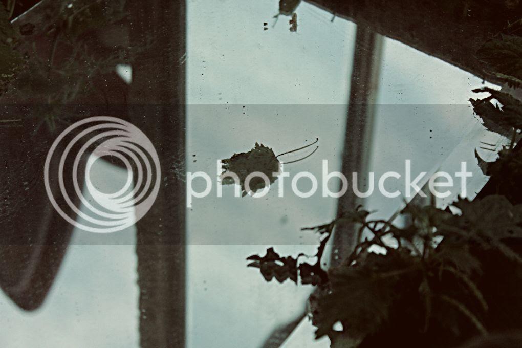 photo 5 POR MES 5._zpsbbp6rhwx.jpg