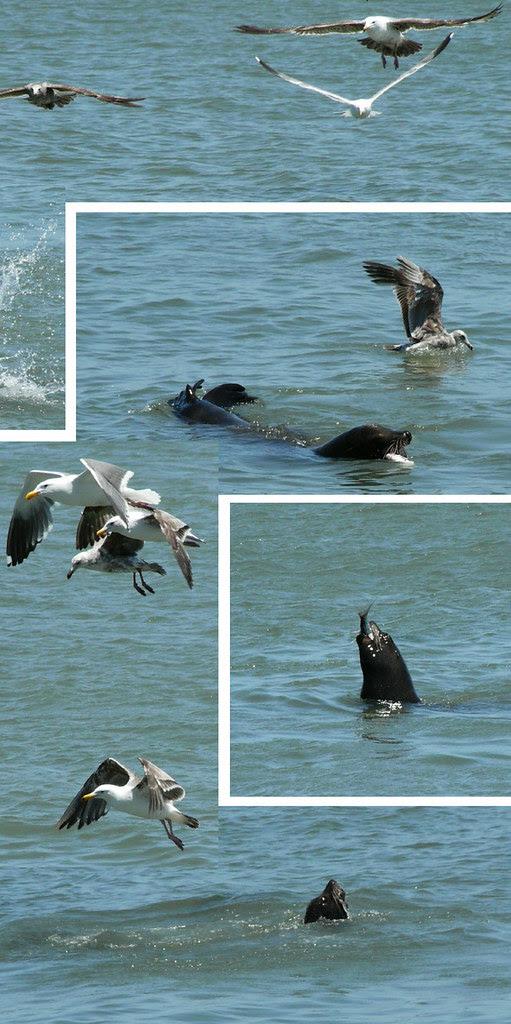 sea lion lunch