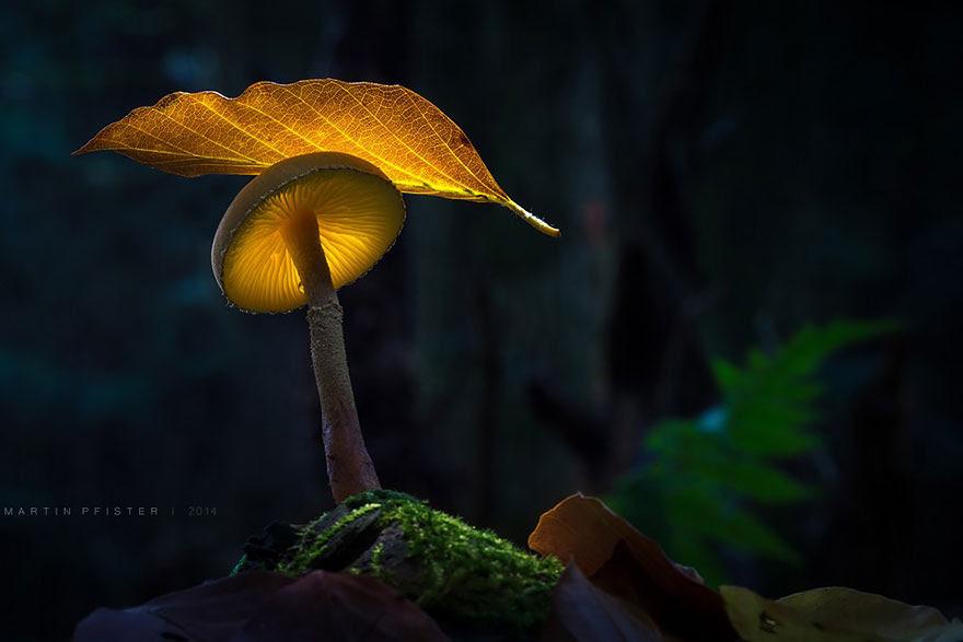mushrooms-martin-pfister-10
