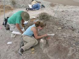 Being a Paleontologist - Paleontology