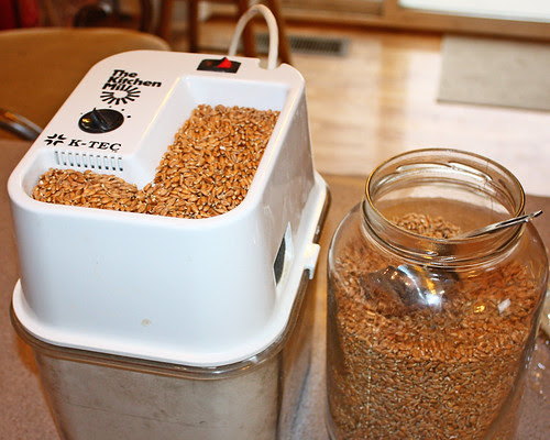 Trying to make bread with sprouted wheat flour