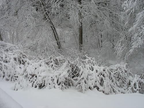 snowy14Jan08-8327