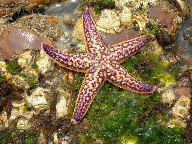 Image result for echinoderms