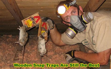 How to Get Rid of Rats in the Attic   Mouse, Rat Removal & Rodent Control Info