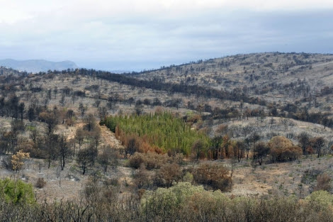 Parcelas experimentales de cipreses en Jérica, tras el incendio de Andilla. | Imelsa