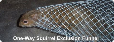 Steps to make your own one way door to funnel out squirrels