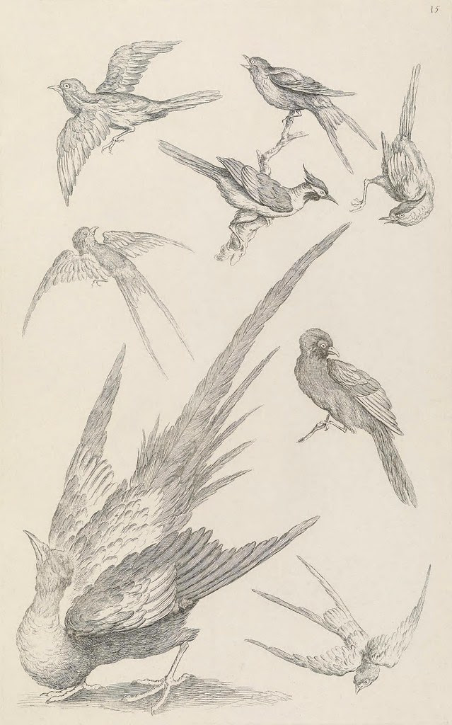 birds of China illustrations
