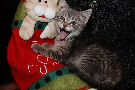 zevalice13 Gambar Anak Kucing Menguap dengan Sangat Comel