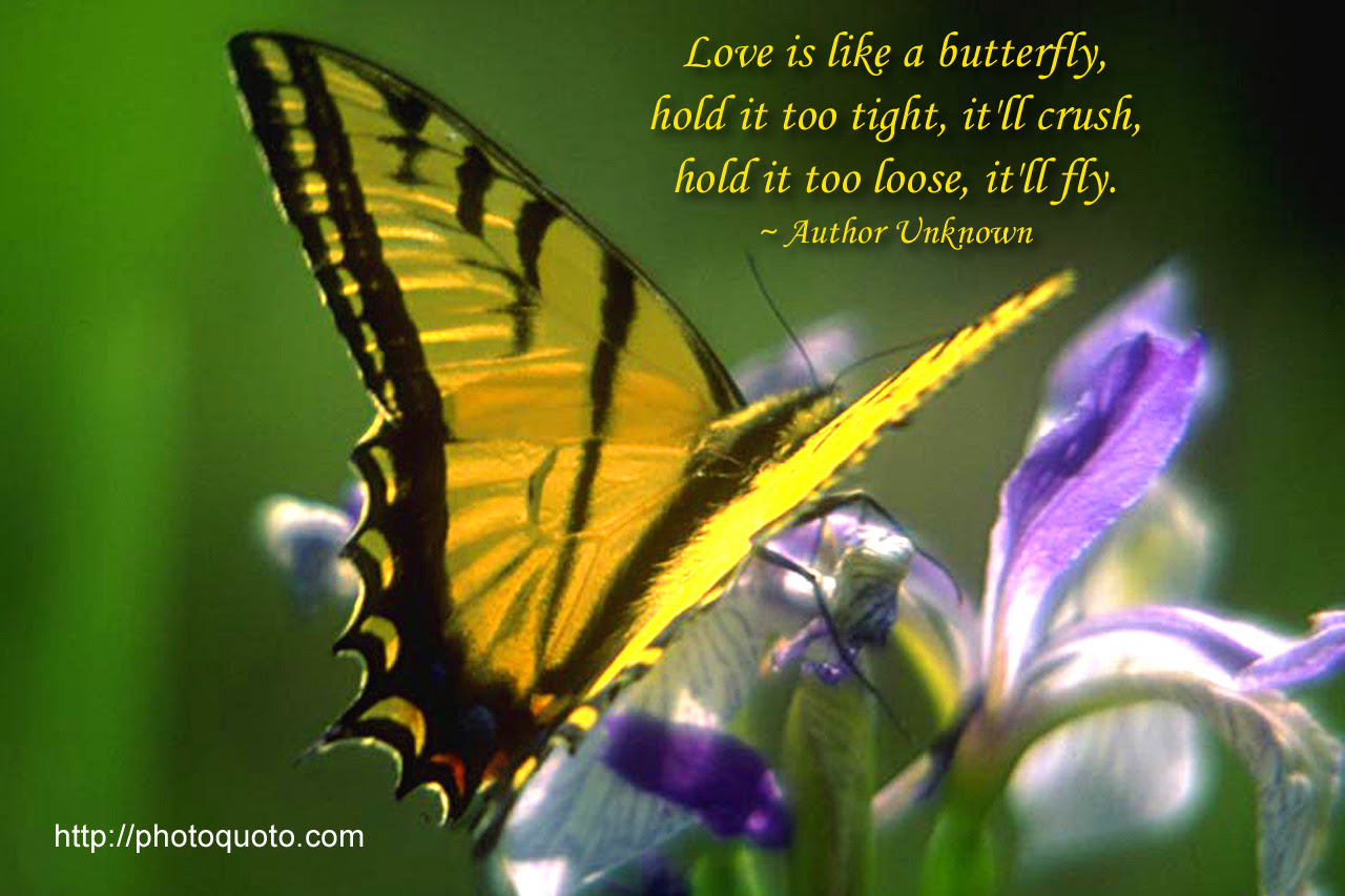Quotes About Butterflies 217 Quotes