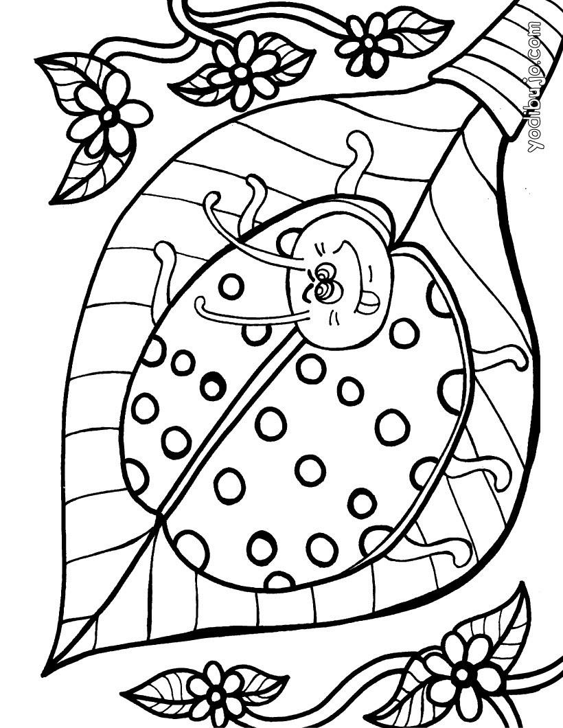 Dibujos Insectos Para Colorear 25 Dibujos De Animales Para