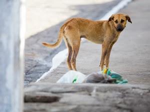 Lei garante atendimento gratuito a animais da população carente (Foto: Jonathan Lins/G1)