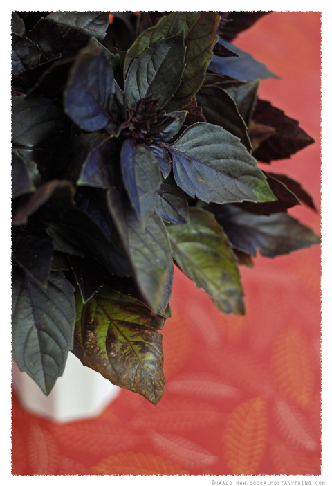 purple basil© by Haalo