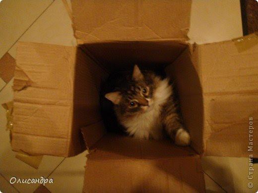 """Есть у меня питомец по имени Адам! Была еще и Ева, но """"унеслась к богам"""", Теперь любимый котик живет у нас один, Хозяин в нашем доме ! Нет, даже, господин!!! Он спит, лишь,там, где хочет,ест, правда, что дадут, Хочу его представить...Портфолио ,вот, тут... фото 12"""