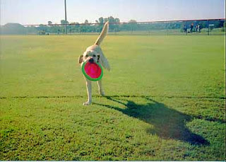 kiner catches frisbee