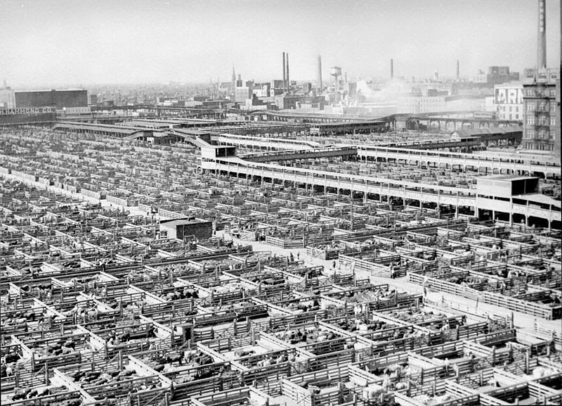 File:Livestock chicago 1947.jpg