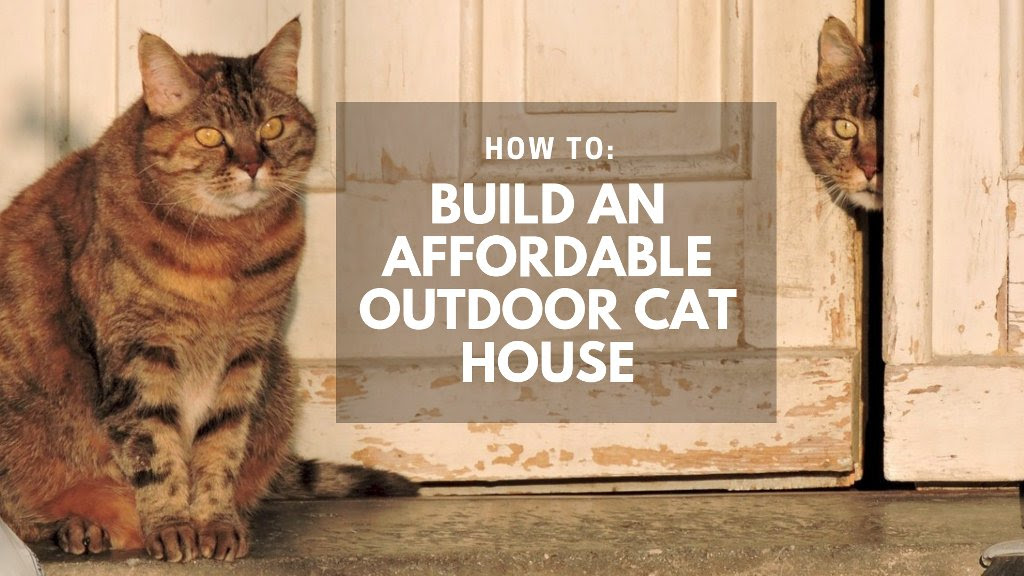 Building an Affordable Outdoor Cat House - All Our Paws
