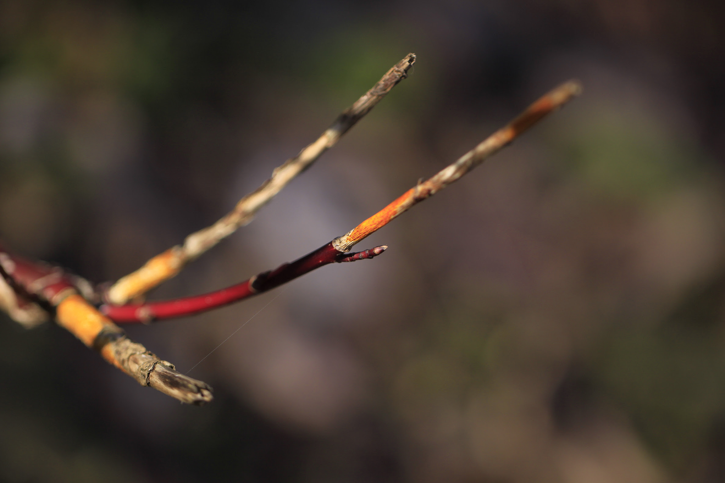 colourful twigs