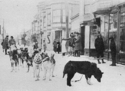 Balto and the team that delivered lifesaving serum to Nome,1925, Balto and the team that delivered lifesaving serum to Nome,1925